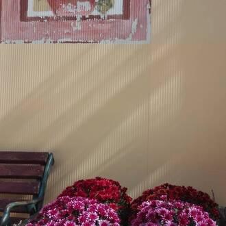 Με πρωτοβουλία της υπαλλήλου Γενικών Καθηκόντων ομορφοχρωματίστηκε το παρτέρι του Σχολείου μας!